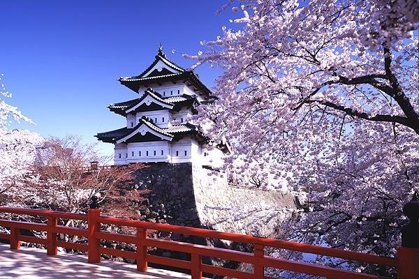 Giapppone_Sakura